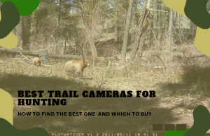 The Best Trail Cameras for Hunting and How to Find Them