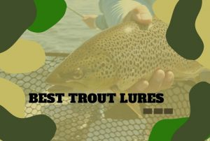 The Best Trout Lures That You Need to Know!