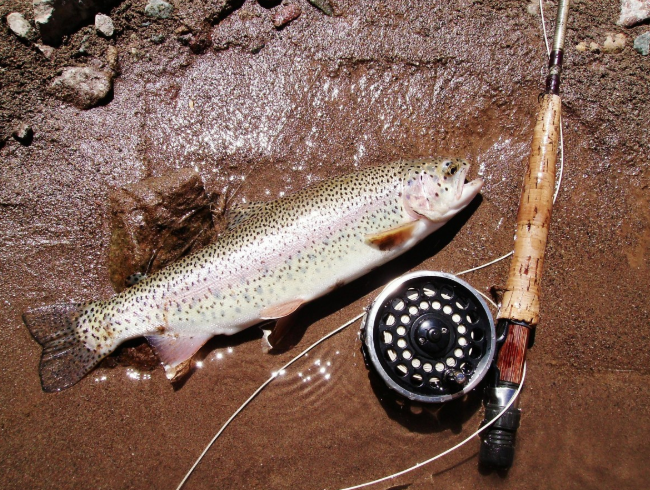 fishing line for trout